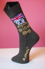 English-dog-kaki